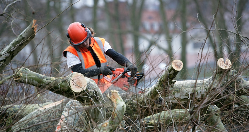 Know What Tree Removal Is and the Things Involved In It